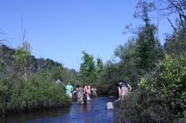 Catching damselflies at Augusta Creek, MI