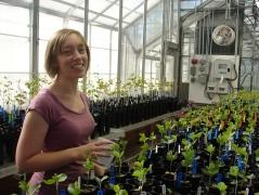 Hayley watering soybean plants